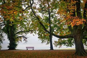 Hintergrundbilder Herbst Park Bank (Möbel) Bäume Natur