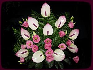 Hintergrundbilder Sträuße Flamingoblumen Lisianthus Schwarzer Hintergrund Blumen