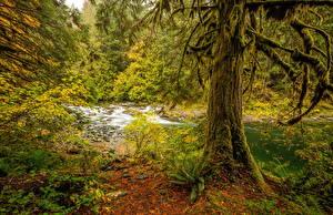 Fotos Kanada Herbst Wälder Flusse Baumstamm Laubmoose Chemainus River Natur