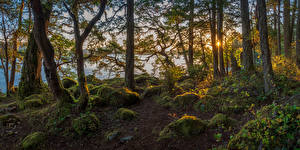 Fotos Kanada Herbst Park Sonnenaufgänge und Sonnenuntergänge Steine Flusse Vancouver Bäume Laubmoose East Sooke Park