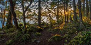 Fotos Kanada Herbst Park Sonnenaufgänge und Sonnenuntergänge Steine Fluss Vancouver Bäume Laubmoose East Sooke Park Natur