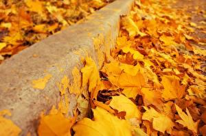 Wallpaper Closeup Autumn Leaf Yellow Acer Nature