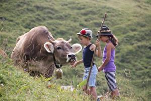 Bilder Kühe Gras Alpen Junge Kleine Mädchen Der Hut Kinder