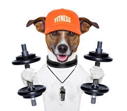 Fonds d'écran Chiens Fitness Fond blanc Jack Russell Terrier Haltères Casquette de baseball Animaux