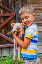Pictures Domestic pig Cubs Boys Smile Children
