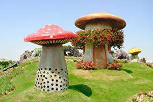 Fotos Dubai Park Pilze Natur Petunien Design Miracle Garden