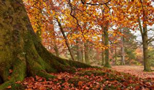 Hintergrundbilder England Park Herbst Bäume Baumstamm Blattwerk Laubmoose Newbiggin
