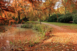 Hintergrundbilder England Park Herbst Teich London Blatt Bushy Park