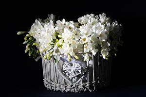 Bilder Freesien Schwarzer Hintergrund Weidenkorb Weiß Blütenknospe Blumen
