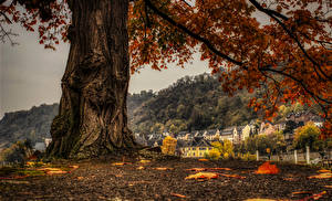Wallpapers Germany Autumn Building Trunk tree Branches Sankt Goar Cities