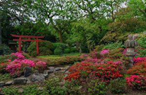 Hintergrundbilder Deutschland Park Rhododendren Strauch Bäume Karlsruhe
