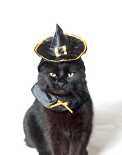 Fotos Halloween Katzen Weißer hintergrund Schwarz Der Hut Blick Tiere