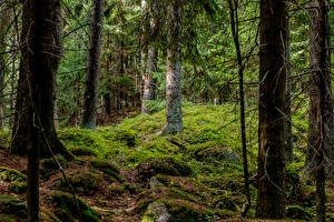 Hintergrundbilder Helsinki Finnland Wald Bäume Laubmoose Natur