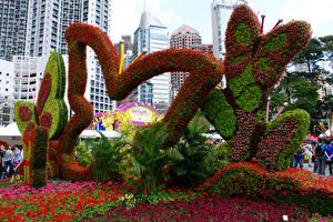 Bilder Hongkong Park Schmetterlinge Design Victoria Park