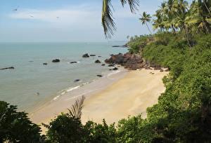 Bilder Indien Küste Strände Strauch Ainesh Beach Kerala