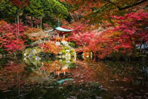 Fotos Japan Kyōto Park Teich Pagoden Herbst Bäume