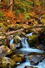 Fotos Japan Park Steine Herbst Laubmoose Bäche Kongorinji Temple Shiga Natur
