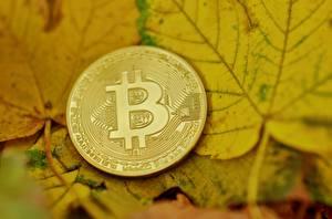 Bakgrundsbilder på skrivbordet Pengar Bitcoin Ett mynt Närbild Blad