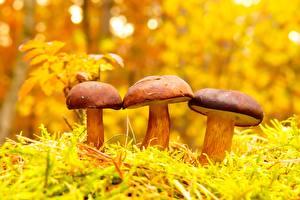Hintergrundbilder Pilze Natur Drei 3