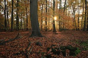 Fotos Niederlande Park Herbst Bäume Blattwerk Lichtstrahl Laubmoose Het Lankheet Natur