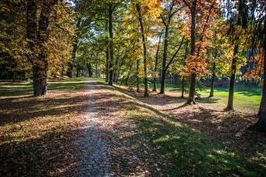 Hintergrundbilder Park Herbst Bäume Blattwerk Weg