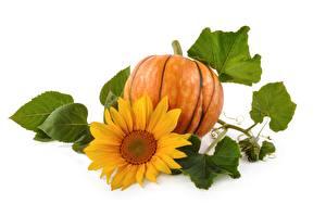 Bilder Kürbisse Sonnenblumen Großansicht Weißer hintergrund Blattwerk Lebensmittel