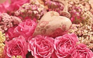 Pictures Rose Closeup Pink color Petals Heart Flowers