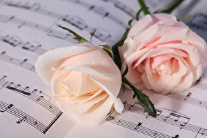 Images Roses Notes Two Pink color Flowers
