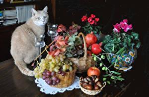Bilder Stillleben Katze Begonien Granatapfel Weintraube Äpfel Vase Weidenkorb Weinglas Lebensmittel Tiere