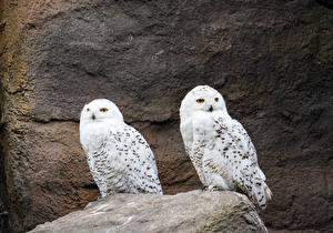 Image Stone Owls Birds 2 animal