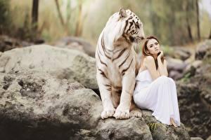 Fotos Steine Tiger Asiatische 2 Braune Haare Sitzend Bengal tiger Tiere
