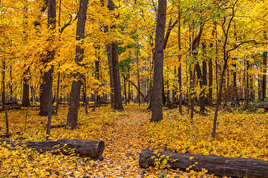 Pictures USA Autumn Parks Chicago city Trees Leaf Wood log Nature