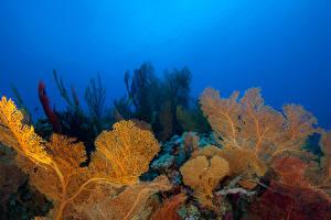 Picture Underwater world Corals