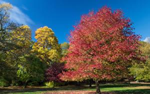 Bilder Vereinigtes Königreich Herbst Garten Bäume Clyne Gardens Swansea Natur