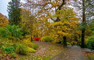 Fotos Vereinigtes Königreich Herbst Park Bäume Blattwerk Strauch Clyne Gardens