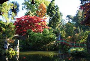 Images United Kingdom Gardens Pond Autumn Bridges Trees Biddulph Grange Garden Nature