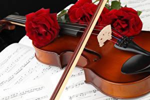 Hintergrundbilder Violine Rose Noten Rot Drei 3 Blumen