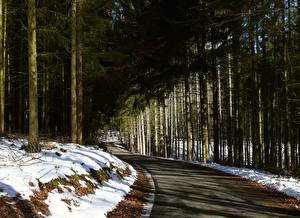 Pictures Winter Forests Roads Snow Trees Spruce Nature