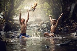 Bilder Asiatische Vögel Junge Sitzend 2 Spritzer Kinder