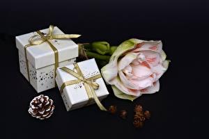 Hintergrundbilder Schwarzer Hintergrund Zapfen Band Schleife Geschenke