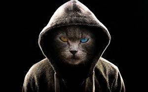 Images Cats Creative Staring Hood headgear Black background Animals
