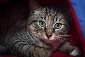 Fotos Katze Schnauze Blick Schnurrhaare Vibrisse