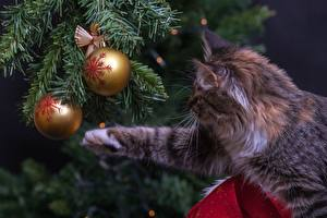 Photo Christmas Cats Spruce Balls Paws Animals