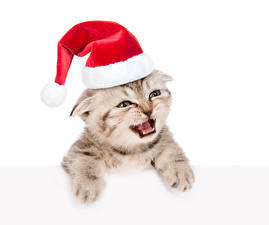 Images Christmas Cat White background Kitty cat Winter hat Staring animal