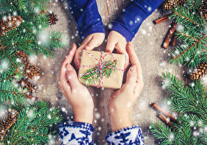 Image Christmas Cinnamon Hands Present Branches Conifer cone Snow