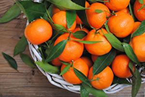 Fotos Zitrusfrüchte Mandarine Großansicht Blattwerk das Essen