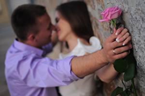 Bilder Paare in der Liebe Mann Rosen 2 Hand Ring Kuss Mädchens