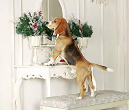 Wallpapers Dog Beagle Vase