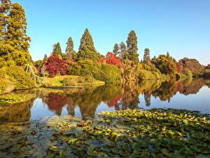 Hintergrundbilder England Herbst Park Teich Bäume Blattwerk Sheffield Park