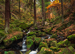 Image England Forest Autumn Stones Moss Streams Wyming Brook Sheffield Nature